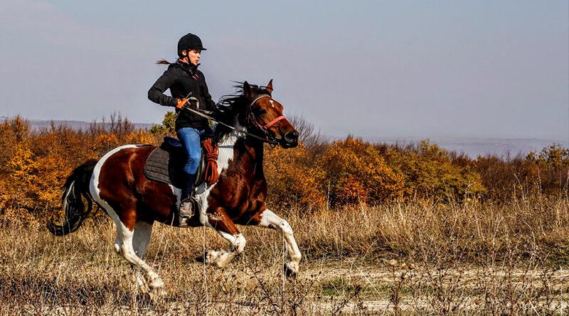 Страховка для конного спорта